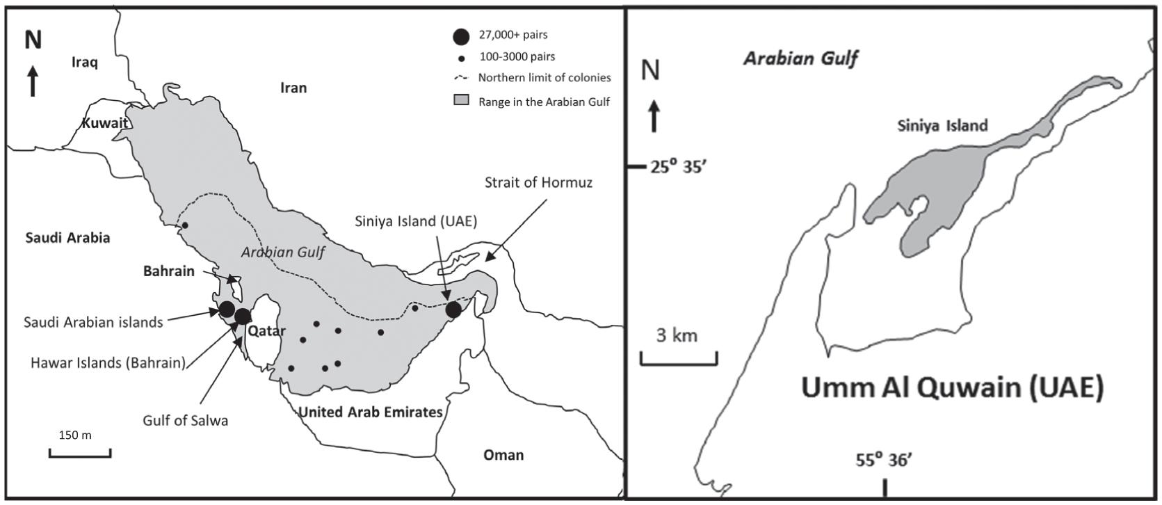 Breeding Population Biology in Socotra Cormorants