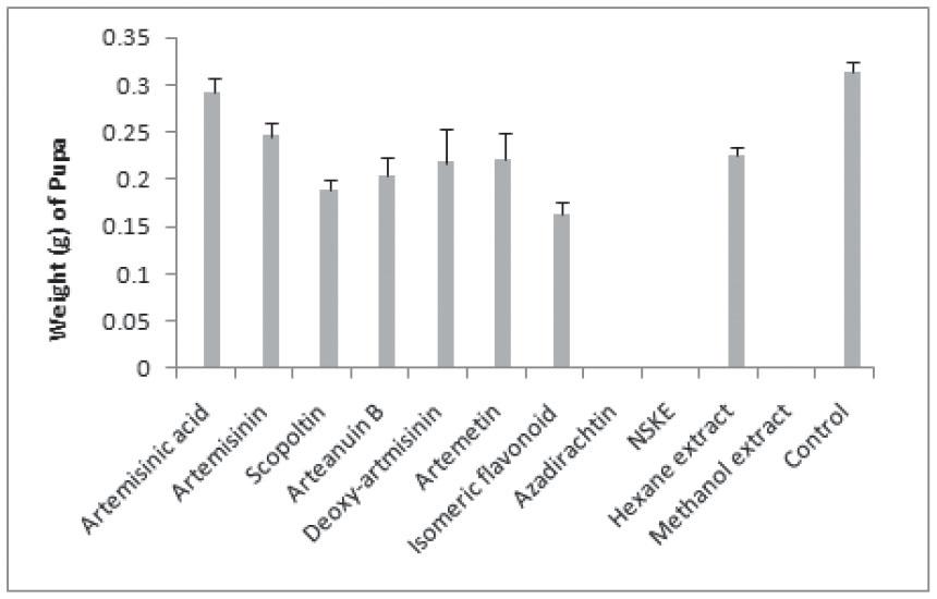 Isomeric Flavonoids of Artemisia annua (Asterales