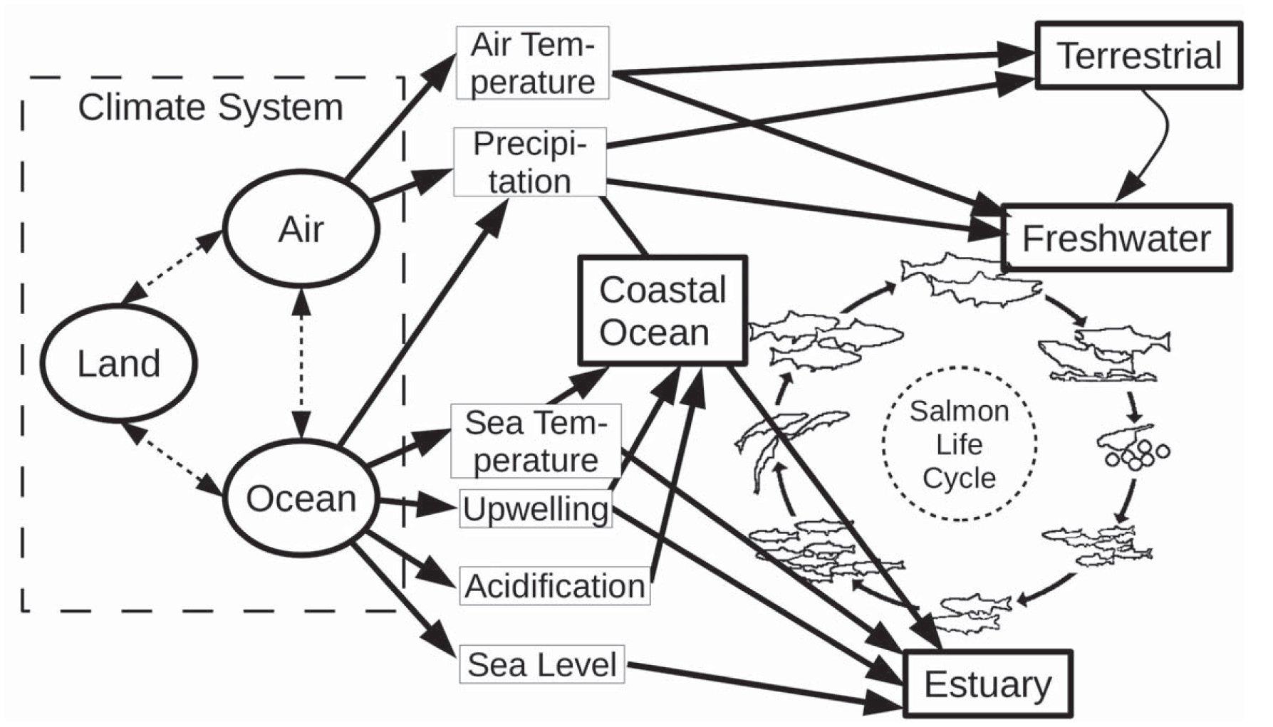 Effects Of Climate Change On Oregon Coast Coho Salmon