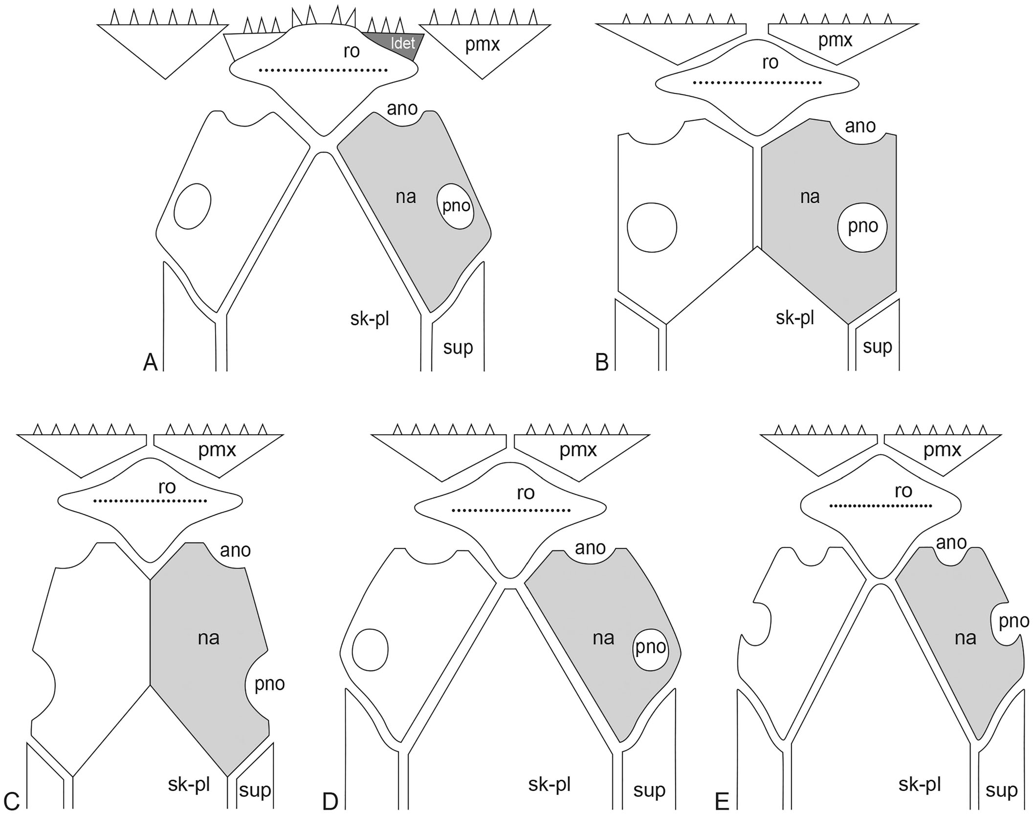 New Triassic Teleosts Actinopterygii Teleosteomorpha