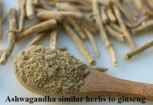 Ashwagandha the Indian Ginseng
