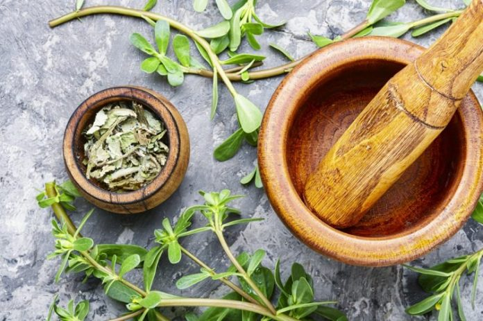 Plant Medicines of Native Americans