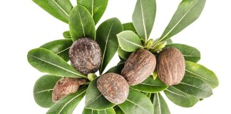 Best Benefits of Shea Plant