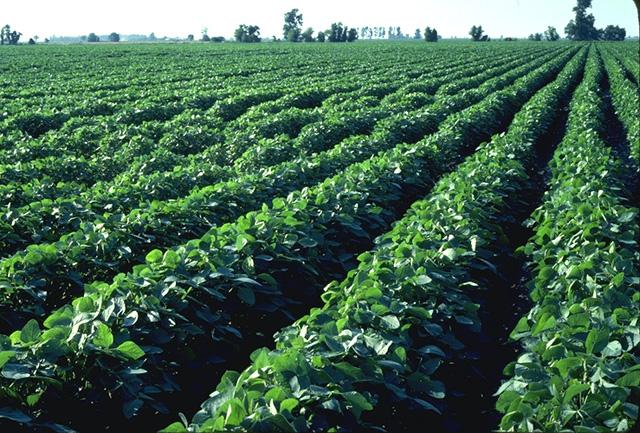 Soybean Bioplastic