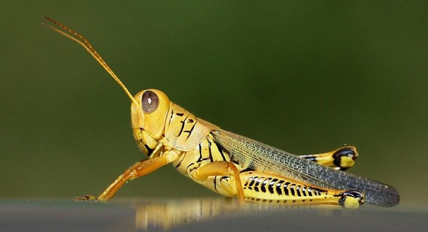 bioplastics biomaterial insects