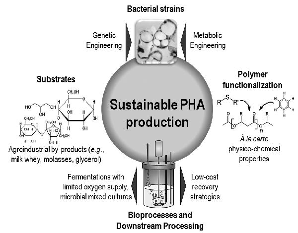 Polyhydroxyalkanoates or PHA