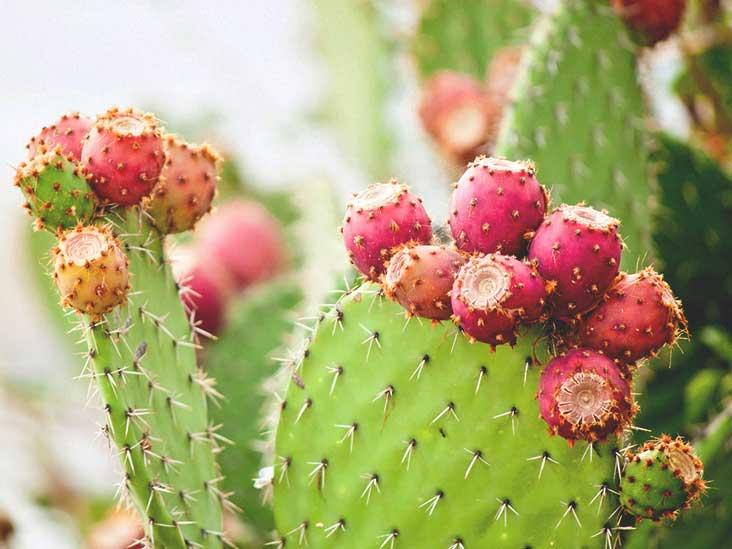 cactus bioplastics