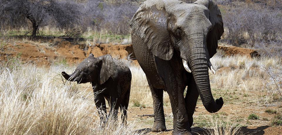 elephant grass miscanthus bioplastics