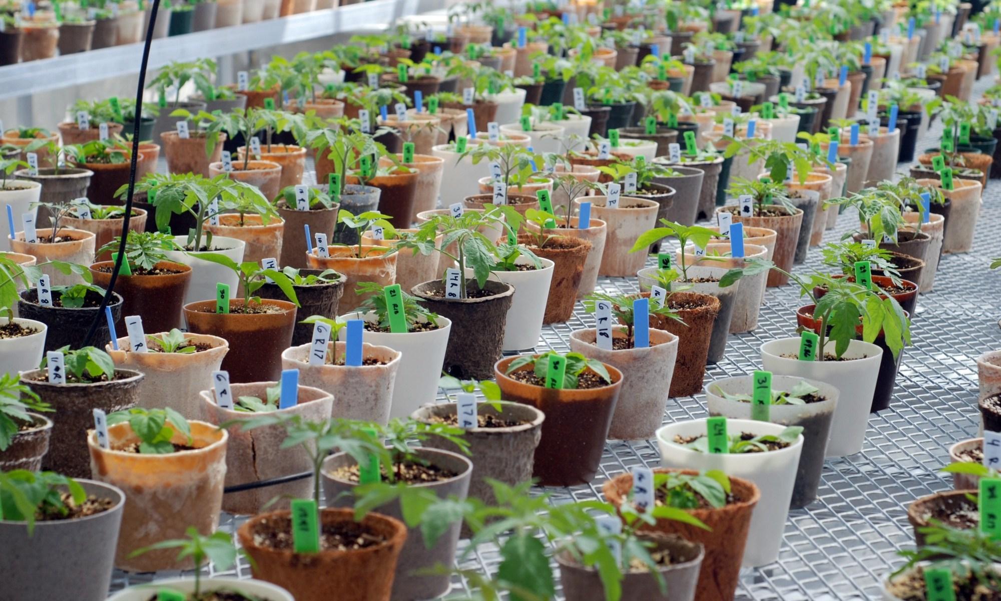 bioplastics plant pots