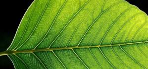 cellulose bioplastics