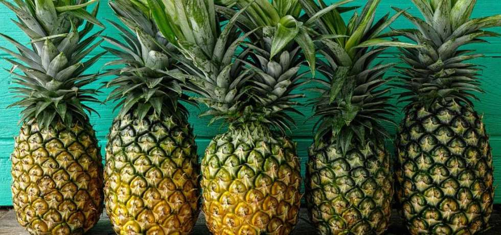 pineapple bioplastics