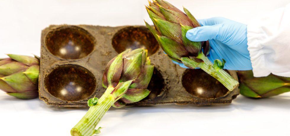agro waste bioplastics