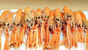 Recyclable Bioplastics Made from Lobster Shells