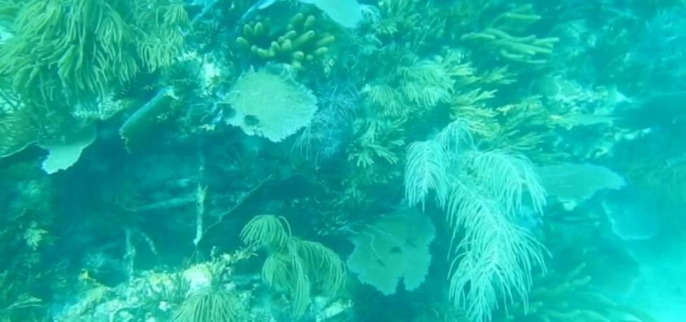 marine fungi biodegradation