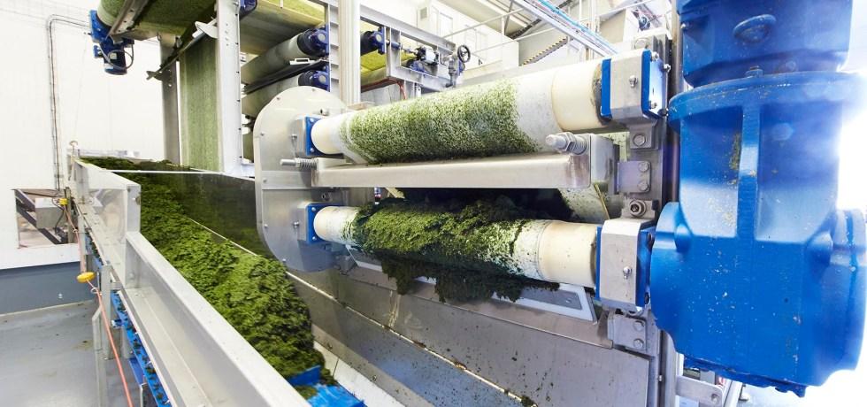 Magnets Extraction Algal Molecules Bioplastics