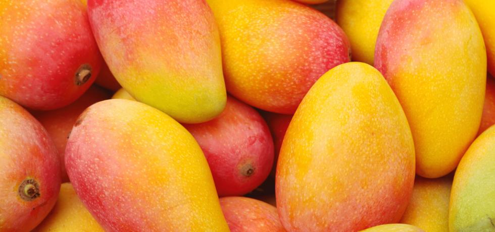 bioplastics mango kernel