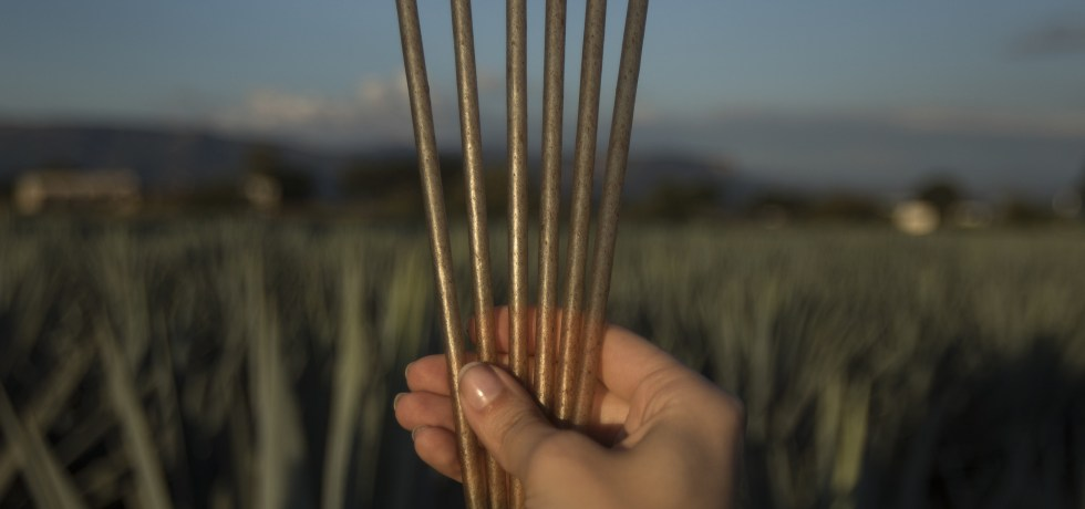 agave straws