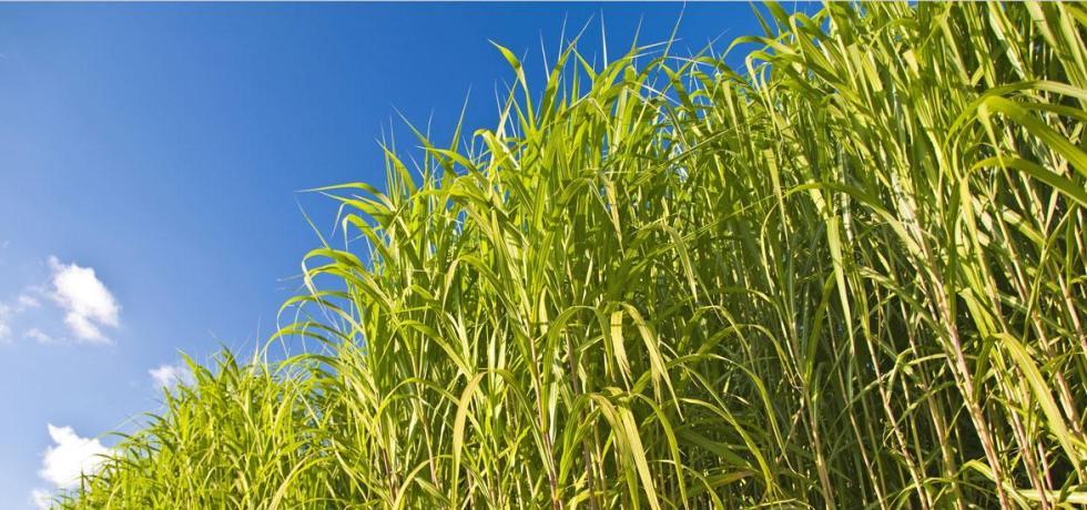 biomass bioplastics