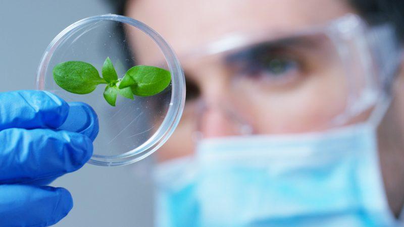 gmo crops bioplastics