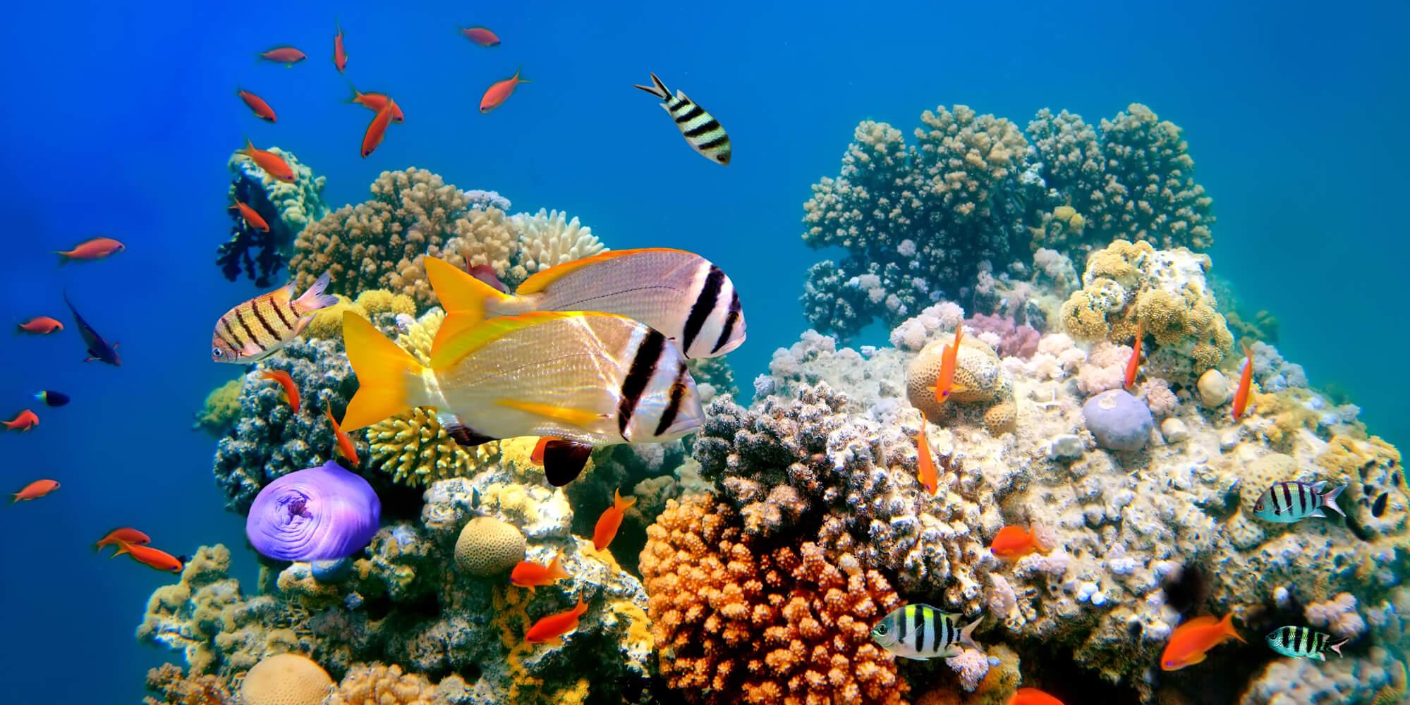 marine ocean ecosystem