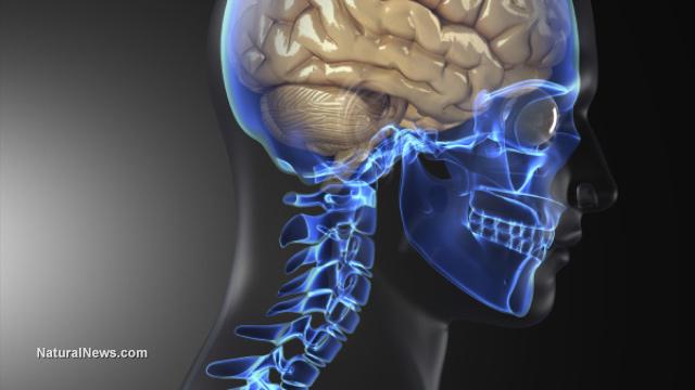 Четири билки, които увеличават капацитета на мозъка