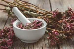 Echinacée plante antidouleur