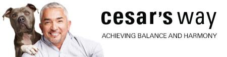 Brands - Cesar