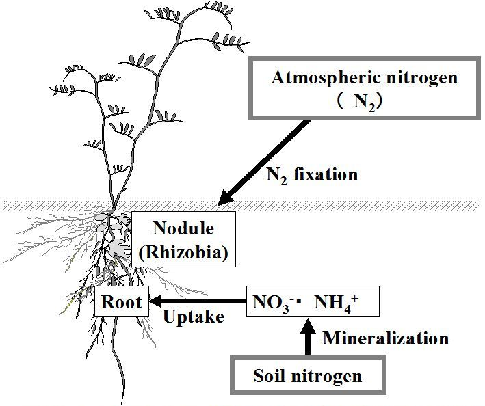 bioremediationsoil « BIOREMEDIATION OF CONTAMINATED SOIL