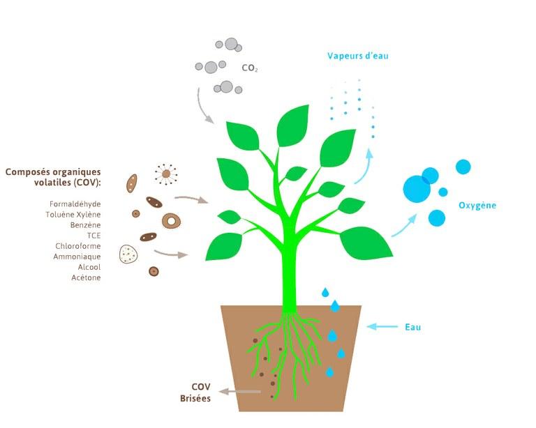 plante-depolluantes-texte-partie-de-la-fleur