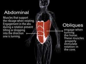 Abdominal and Obliques for Rotation