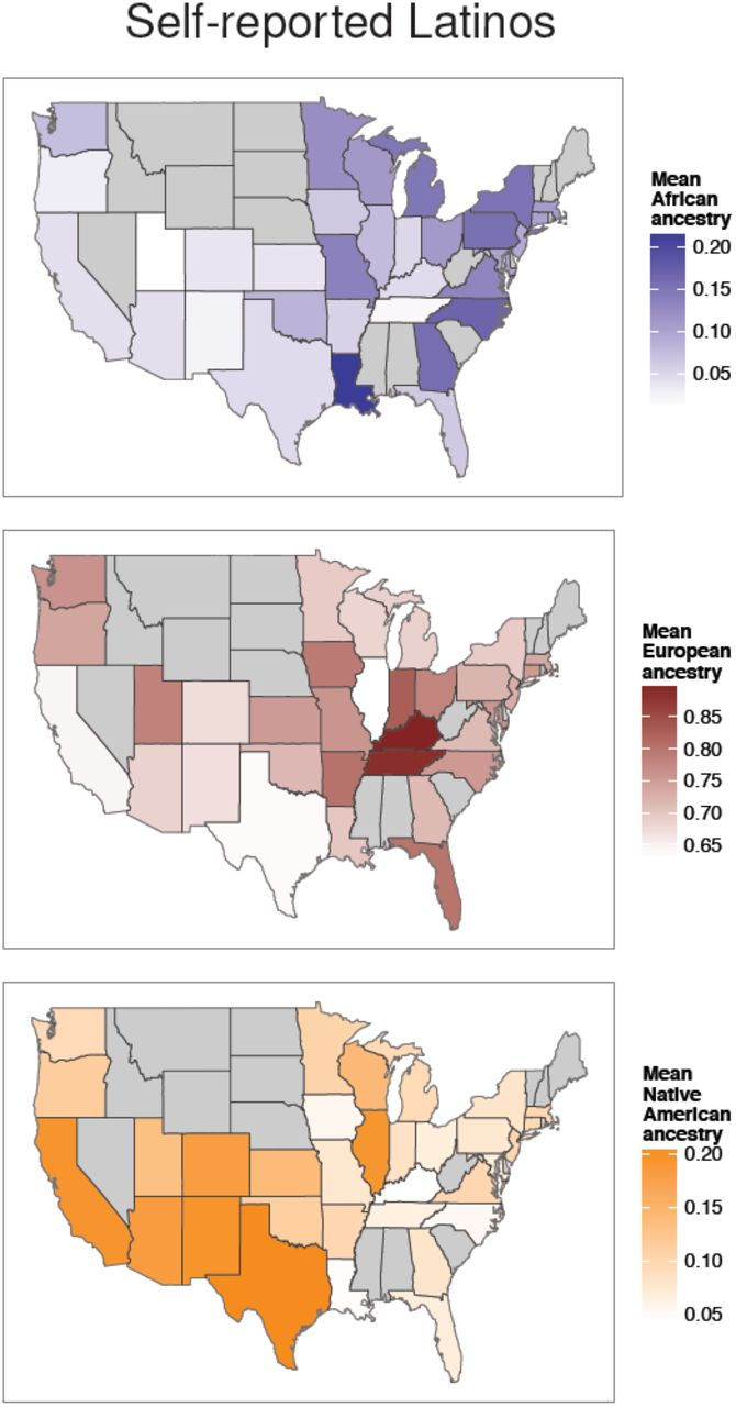 American Ancestry : american, ancestry, Genetic, Ancestry, African,, Latino,, European, Americans, Across, United, States, BioRxiv