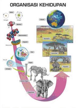 Hirarki Kehidupan : hirarki, kehidupan, TINGKATAN, ORGANISASI, KEHIDUPAN, (HIERARKI, KEHIDUPAN), Biosaintek