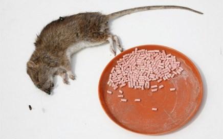 Использование профессиональных приманок не оставит крысам шанса