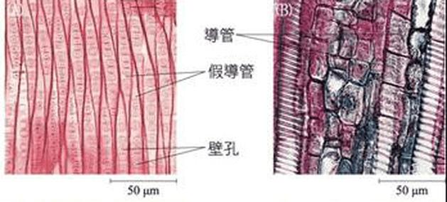 常見的植物細胞形態及其功能 - 生物科共同備課網