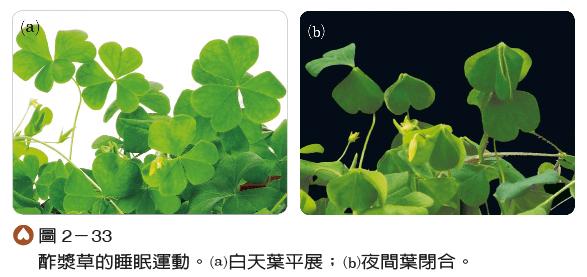 2-3 植物對環境反應的刺激 - 生物科共同備課網