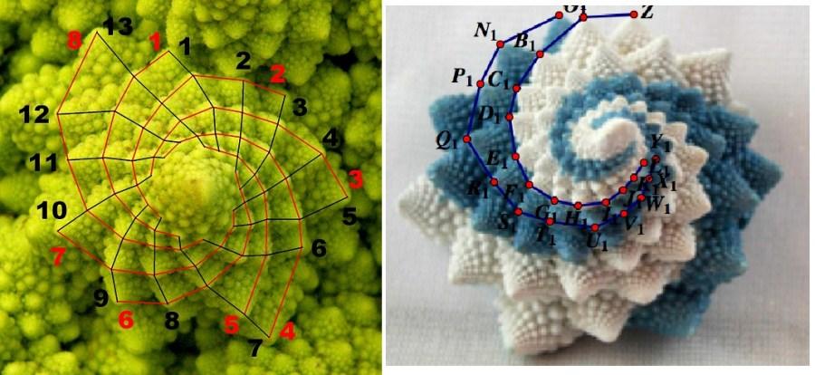 Cavolfiore romanesco con spirale di Fibonacci