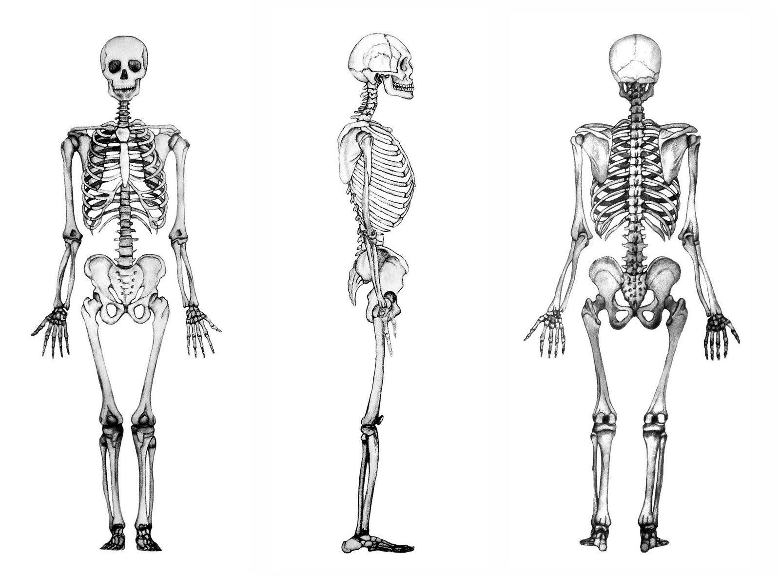 inhame osso esqueleto
