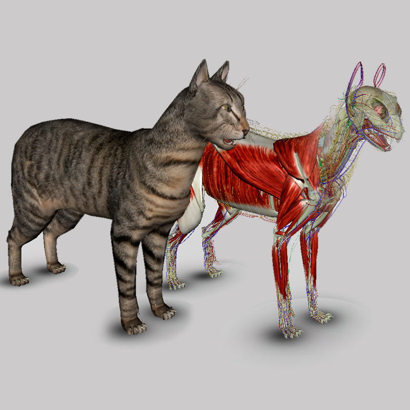 cat dissection muscle diagram back 2004 saturn ion 2 radio wiring 3d anatomy software biosphera org
