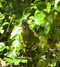 21May-squirrelmonkey