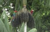 22May-redgreenmacaws1