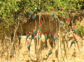 macaws (1)
