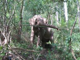 elephants-2016-14