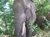 elephants-2016-7