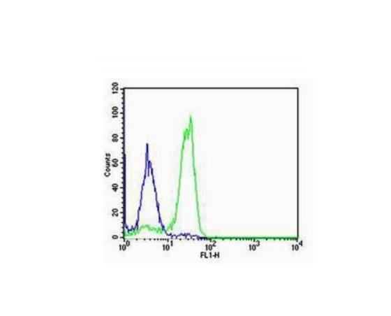 SP-C Polyclonal Antibody