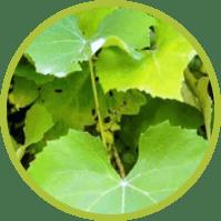 Биосистема - жиросжигающий комплекс (Латвия)