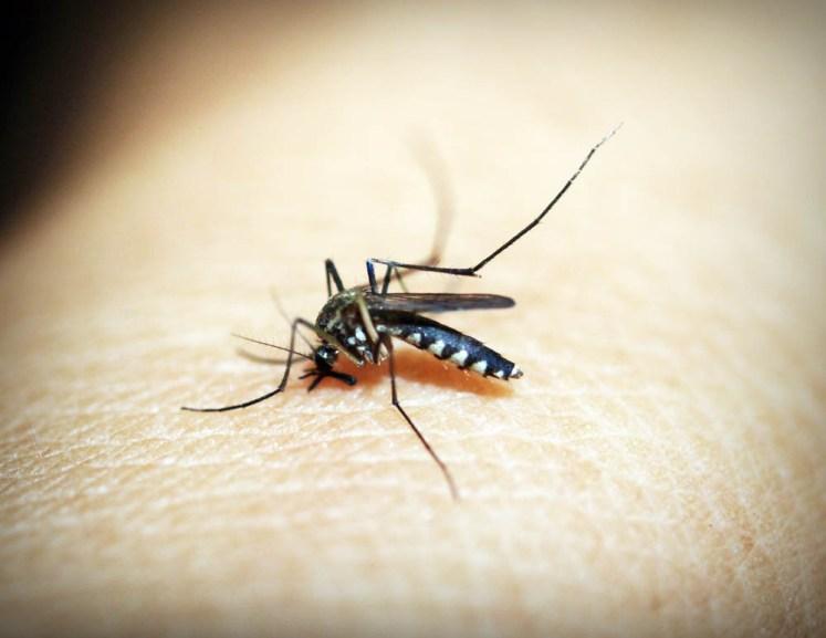 Komary to najniebezpieczniejsze zwierzęta świata