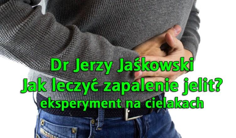 Dr Jerzy Jaśkowski: eksperyment na cielakach. Jak leczyć zapalenie jelit?