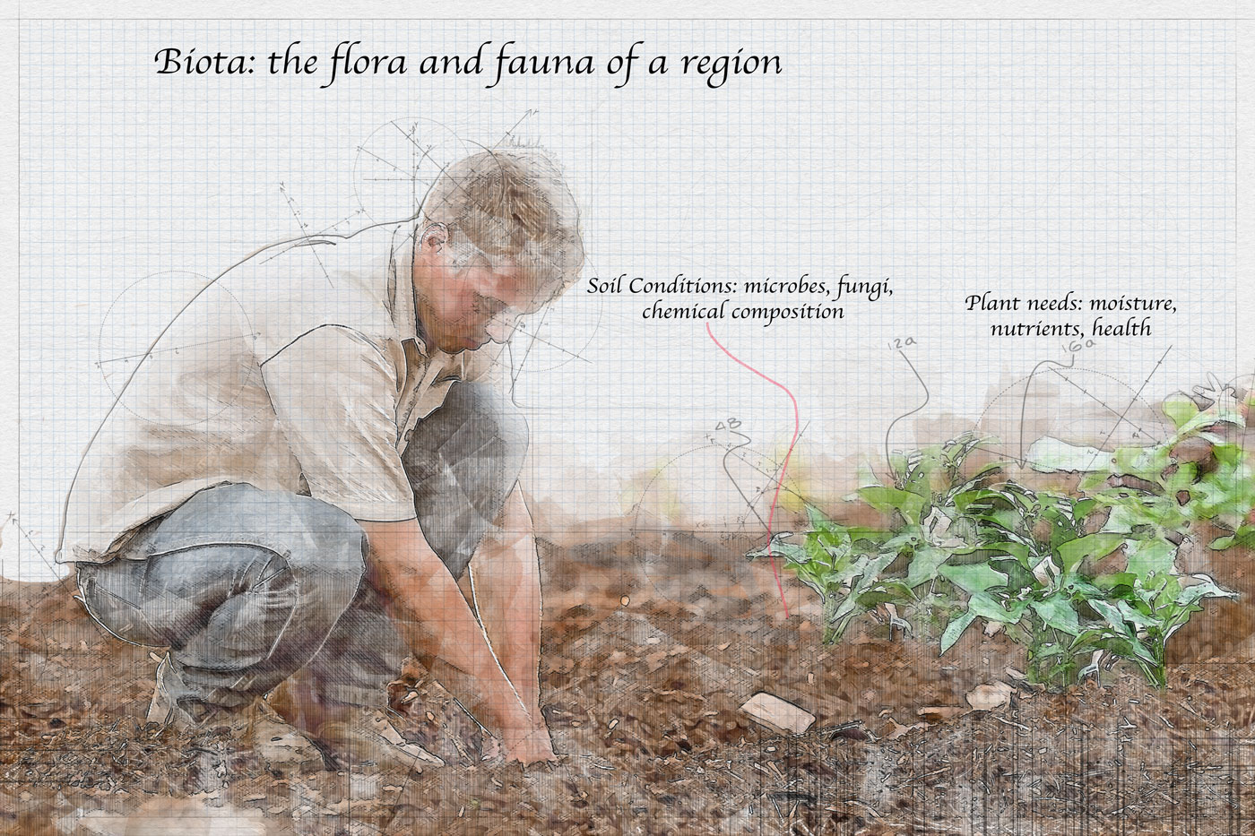Biota: the flora and fauna of a region Determining Soil Conditions: microbes, fungi, chemical composition.  Understanding plant needs: moisture, nutrients, health.