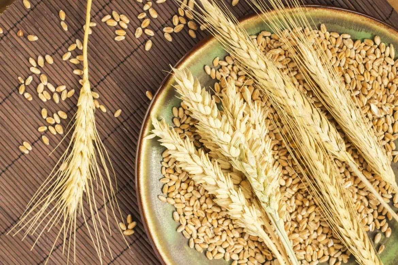 durum wheat genome