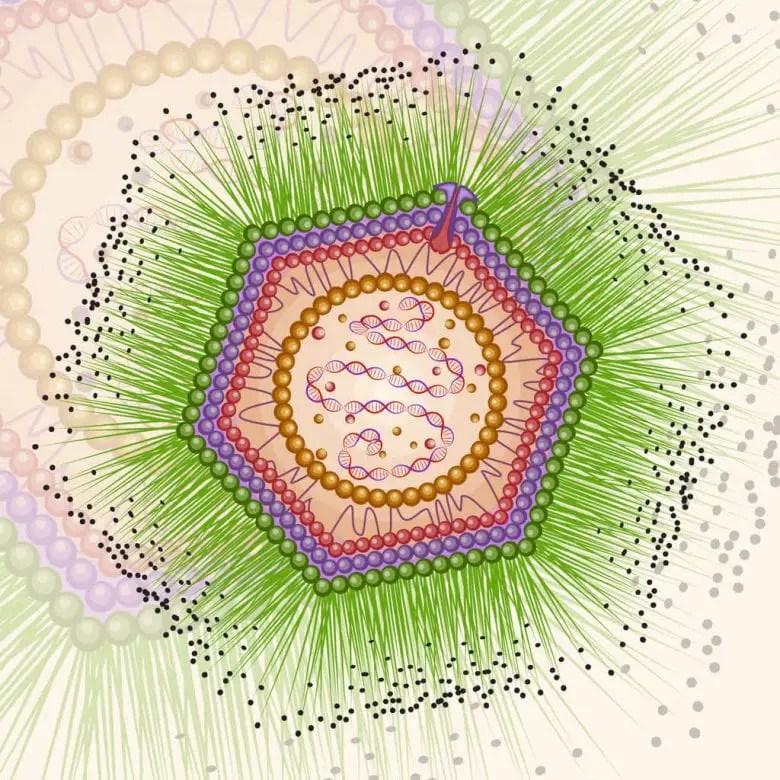 Giant Viruses